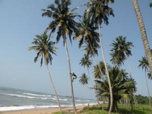 kokosnötkille