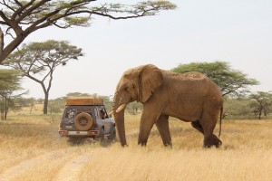 ElefantBil